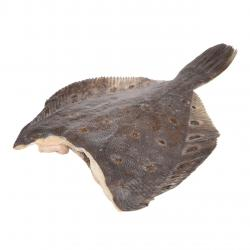 Камбала без головы свежемороженая