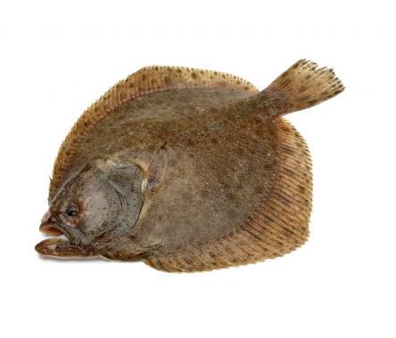 Камбала икряная 3-5 кг свежемороженая