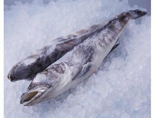 Ледяная рыба свежемороженая